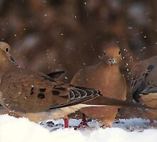 The Mourning Doves by Jeannine St-Amour