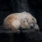 Dreaming Polar Bear by TLCPhotography