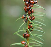 Ladybug Kebab by Trish Peach