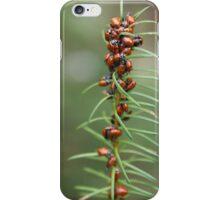 Ladybug Kebab iPhone Case/Skin