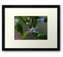Small White Star Framed Print
