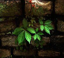 Illumination by RC deWinter