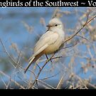 Songbirds of the Southwest ~ Vol 1 by Kimberly Chadwick
