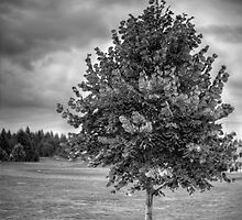 Tree In The Storm by Kelly-Shane Fuller
