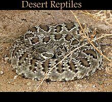 Desert Reptiles by Kimberly Chadwick