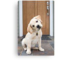 Inquisitive Yellow Lab Puppy Canvas Print