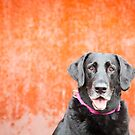 Black Dog...Orange Wall by baileyandbanjo