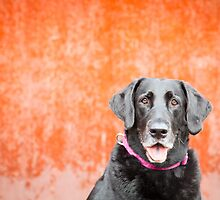 Black Dog...Orange Wall by baileyandbanjo