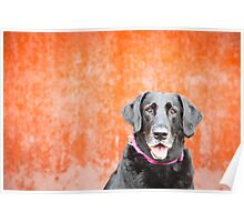 Black Dog...Orange Wall Poster