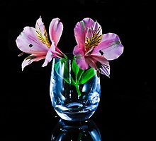 Alstroemeria , Lily of The Incas by Tom Newman