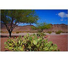 Mojave Desert Scene Photographic Print