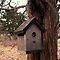 Bird Houses and/or Bird Baths