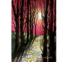 Moonlit Forest Photographic Print