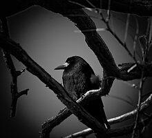 Mystical Crow by CebotariN