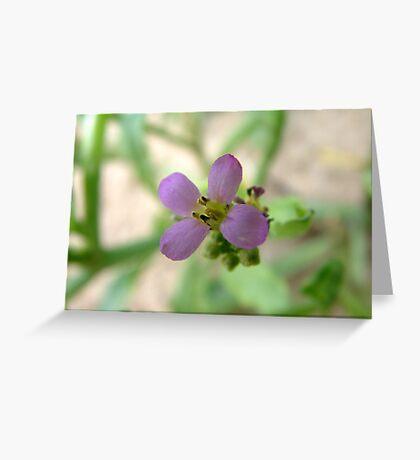 Flower Monington Peninsula Vic Greeting Card