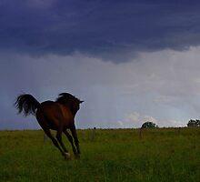 Storm Colt by Penny Kittel