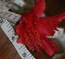 Measured Beauty....... by cathywillett