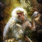 Baboon #2 by Robert  Welsh