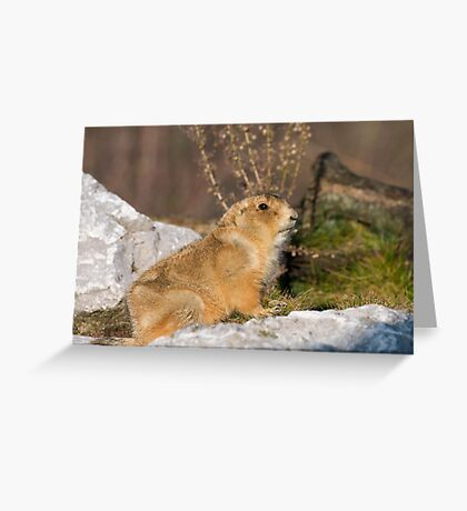 THE GOLDEN FUR Greeting Card
