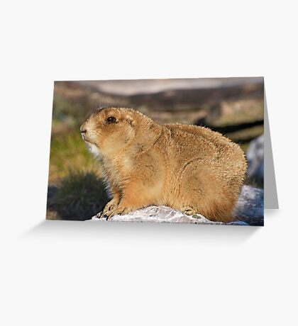 THE GOLDEN FUR -IV- Greeting Card