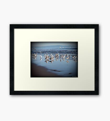 Dancing Sea Gulls Framed Print