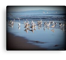Dancing Sea Gulls Canvas Print