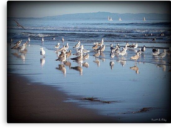 Dancing Sea Gulls by Scott Riley