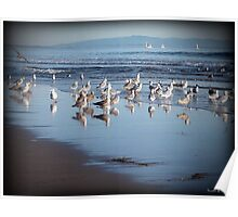 Dancing Sea Gulls Poster