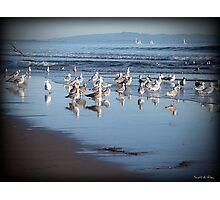 Dancing Sea Gulls Photographic Print