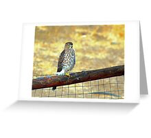 Desert Prarie Falcon  Greeting Card