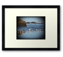 Dancing Sea Gulls 2 Framed Print