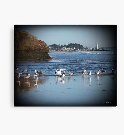 Dancing Sea Gulls 2 Canvas Print