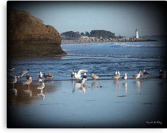 Dancing Sea Gulls 2 by Scott Riley