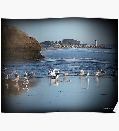 Dancing Sea Gulls 2 Poster
