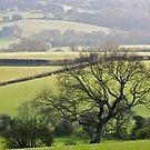 East Sussex.UK by richard  webb