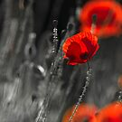 Poppy Revelation by Sarah-fiona Helme