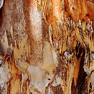 Tree Bark Abstract #2 by Jane Underwood