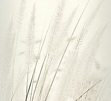 Milky Moon Grass by reindeer