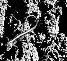 Reptile Noir by Glenn Cecero