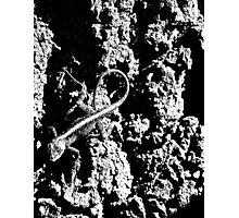Reptile Noir Photographic Print