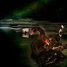 Black Swans by hampshirelady