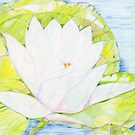 Water Lily by Karen Clark