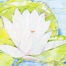 Water Lily by Karen Clark