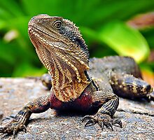 Bearded Water Dragon by Tracie Louise