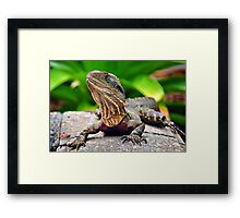 Bearded Water Dragon Framed Print