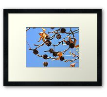 Whence the Idea for Tree Ornaments Framed Print