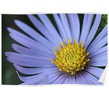 fallen pollen Poster