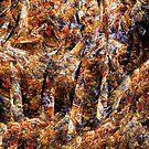 Choosing the fall by Benedikt Amrhein