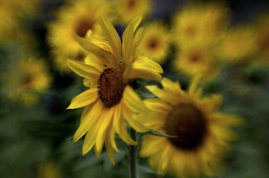 ~ Sunny Side ~ by Maria  Moro