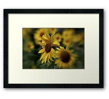 ~ Sunny Side ~ Framed Print